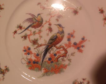 Bohemia Bird of Paradise China Plates