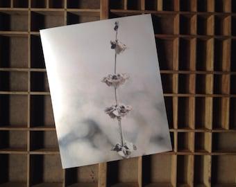 Silver frost macro plant metallic photo