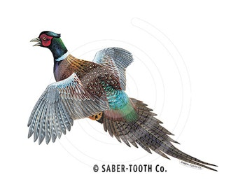 Pheasant Bird Decal Sticker