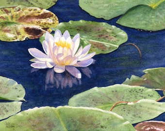 Water Lily Watercolor Painting Print by Cathy Hillegas, 16x21 watercolor print, watercolor lily, lake house, floral watercolor, gift for mom