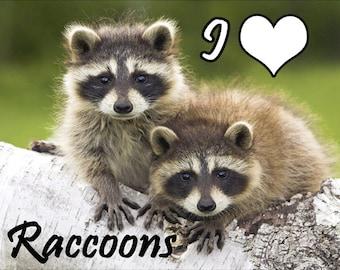 I Love Raccoons Fridge Magnet 7cm by 4.5cm