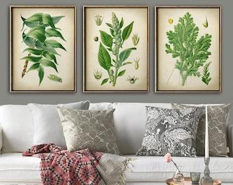 Botanical print set of 3, green plants print set, botanical poster, botanical wall decor, green herb poster,  greenery of nature