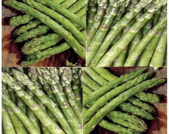 100 x UC-72 All MALE ASPARAGUS seeds - Huge Spears & Large Yield ~ A Mary Washington type asparagus