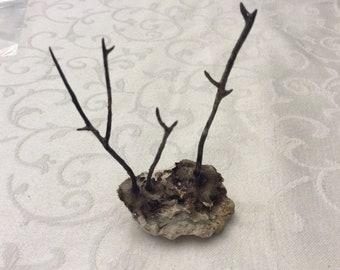 Sea Fan Branchs on coral base
