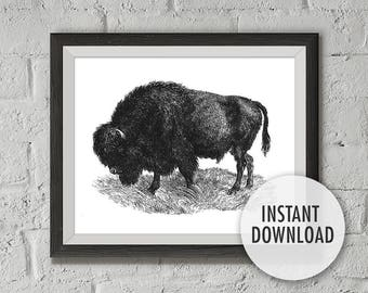 Instant Download Buffalo Print, Printable Vintage Illustration, American Bison, Buffalo Print, Wall Decor Wall Art Print, Home printable