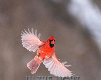 Cardinal in Snow #4 - fine art photography