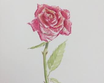 Red Rose Original Watercolor1