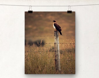 Alberta Prairies, Hawk Photo, Animal Photography, 8x10 Print, Autumn