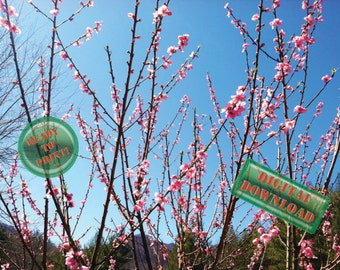 Spring Flower Blossoms Digital Photograph Orchard Nectarine Fruit Tree