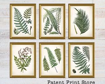 Vintage Ferns Prints. Botanical Print. Art Print. Fern Prints. Antique Botanical Prints. Wall Art. Farmhouse Decor. Dining Room Art. 131