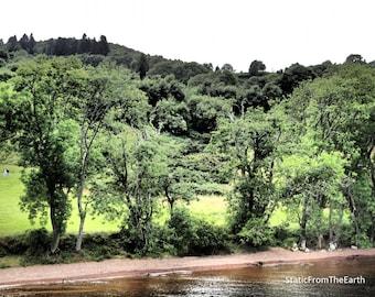 Tree Photography / Woodland Photography / Lake Photography / Nature Photography