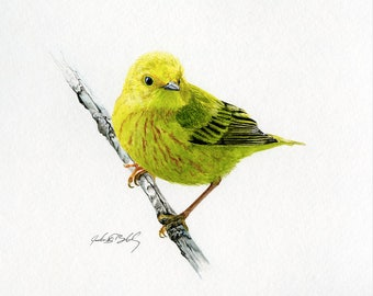 Yellow Warbler Watercolor Print