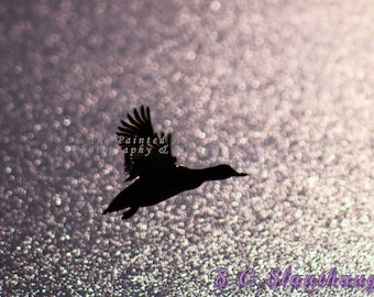 Flying Duck Photo (Limited Edition)