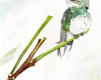 Hummingbird On a Branch - Original Watercolor Painting