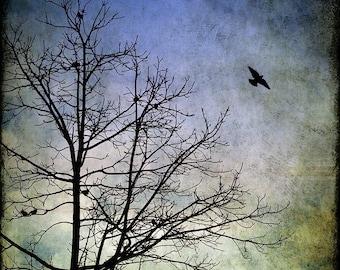 Nature Photography, Flying Bird, Black Crow, Blackbird, Winter Art Print, Tree, Bare Branches, Colorful, Green, Blue - Awaken Your Dreams