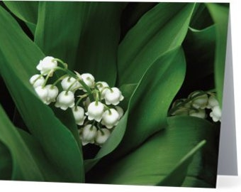 Lily of the Valley - single blank card, Gifts for her, Gifts for mom, Gifts for nature lovers, Gifts for gardeners, Gifts for flower lovers