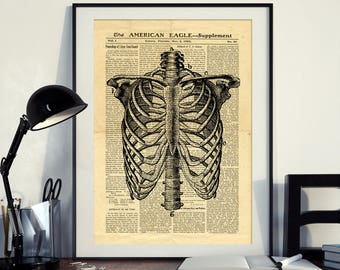 Antique Anatomy Human Skeleton Thorax Bones Vintage Printable Collage Old Newspaper A3 Art Print 11x16 Home Decor - DIGITAL DOWNLOAD HQ300dp