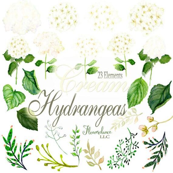 cream hydrangeas watercolor clipart white clip art ivory rh etsy com hydrangea clipart black and white hydrangea clipart free