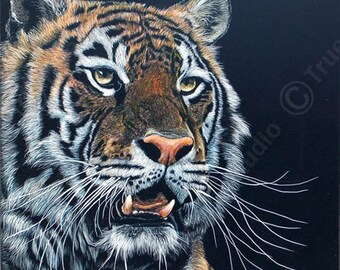 Tiger Scratch board artwork