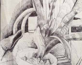 Pen and Ink on Paper Still Life