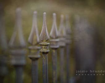 photography print: old gate, metal gate, moss covered gate, fence, fine art print