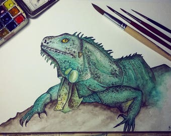 Animal Iguana Watercolor Art drawing iguana painting Portrait lizard
