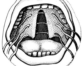 Medical, Anatomy decor, Anatomical print, Anatomy, Medical art, Anatomy print, 108