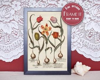 "Vintage illustration of Tulips - framed fine art print, flower art, home decor 8""x10""; 11""x14"", FREE SHIPPING - 96"