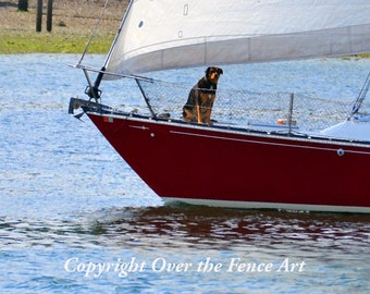 Sailboat with Dog On the Bow Greeting Card Photography Nautical Print Red Sailboat Reflected in Blue Waters