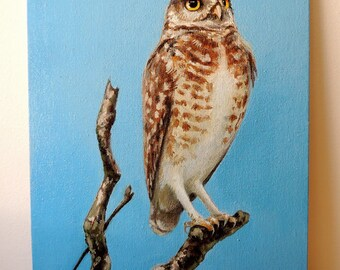Burrowing owl. Oils. Original.