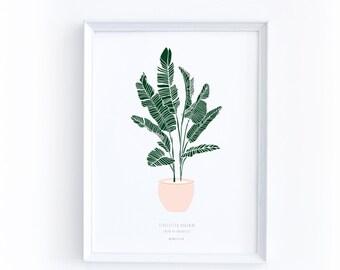 Illustration Print Art, Strelitzia Reginae, Gift for Her, Plant Print, Nature Art, Modern Minimalist, Bathroom Décor, Spring Print