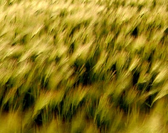 abstract photography, landscape photography, fine art photography, impressionist, large wall art, home decor, office decor