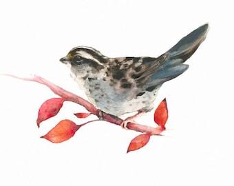 White Throated Sparrow- Archival print-  bird art, christmas