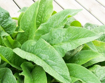 BULK 60g RAW Sun Dried Comfrey - Organically Grown, Hand Harvested - Food Market - Herbs and Spices