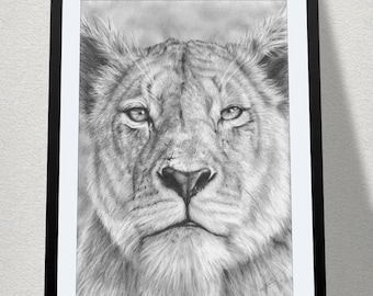 "11.69"" x 16.53"" drawing of a lioness stare in graphite on Bristol paper"