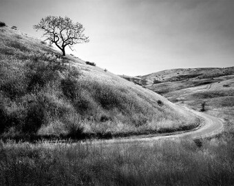 "Black and White Photo Wall Art, Lone Tree on a Hill Photo, Fine Art Metal Print, ""Hillside"""