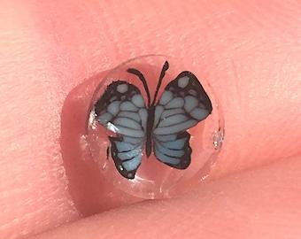 Turquoise Butterfly COE104 murrini