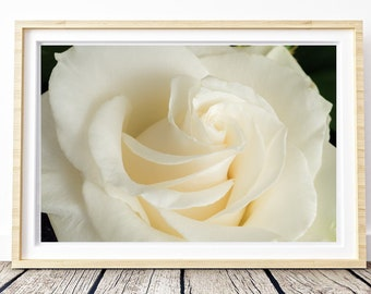 White rose. Landscapes of Spain. Sun and light. Printable image for download. From Spain with Love