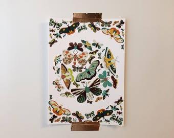 "Moth Print (5""x7"")"