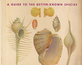 Vintage Sea Shells of the World A Golden Nature Guide Book, C1962