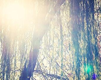 Sun Lit Tree - 8x10 photograph - Nature Art - fine art print - vintage photography - nursery room - nature photograph