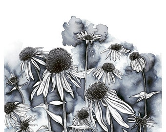 Pen and Ink illustration of echinacea flowers