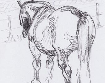 Original Draft Horse at Rest Black Chalk Sketch 252
