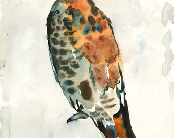 RED TAILED HAWK Art Print 8x10inch-Home decor-wall art-animal art-Poster