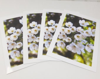 White Cherry Blossoms Greeting Cards Blooming Spring Flower 5 x 7 Blank Note Cards