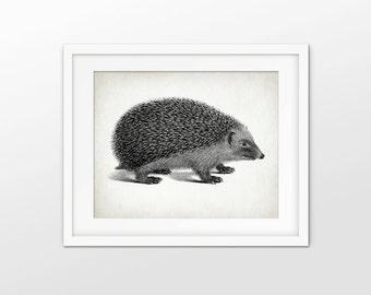 Hedgehog Art Print - Hedgehog Illustration - Hedgehog Decor - Hedgehog Art - Hedgehog Animal Art - Single Print #1656 - INSTANT DOWNLOAD