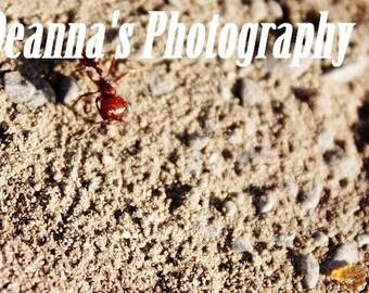 Hormiga roja por Deanna Bernal