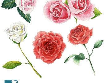Watercolor Roses I Clipart - Hand Painted, card design, invitations, watercolor, paper crafts, hand drawn - INSTANT DOWNLOAD