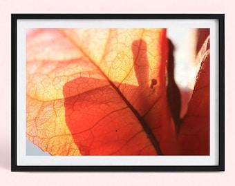 Minimalist Fine Art Photography Print   Bougainvillea Art Print   Nature Photography Print   Flower Poster Print