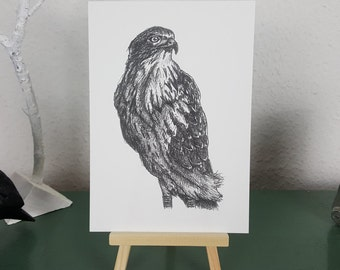 Buzzard Art Print of Pen and Ink illustration; British Wildlife series